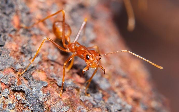 an ant outside