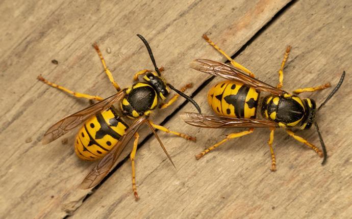 bees on wood planks