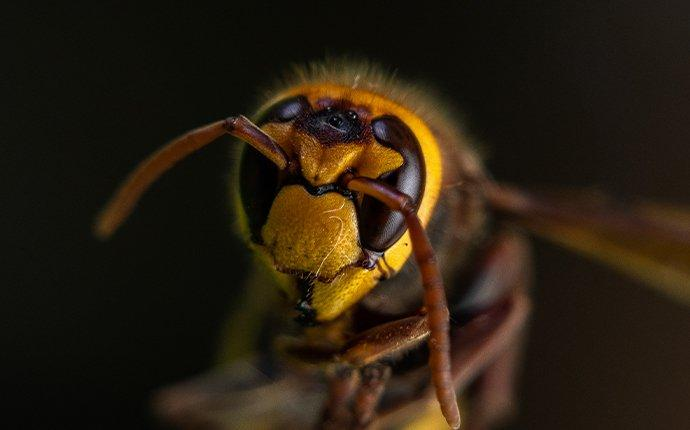 close up view of a hornet outside