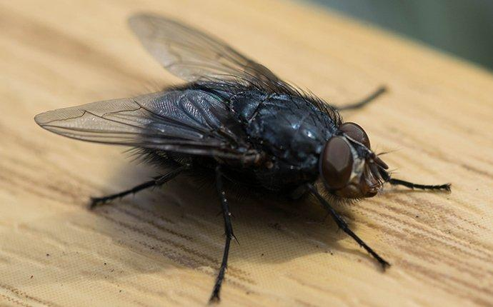 a house fly landing on a countertop