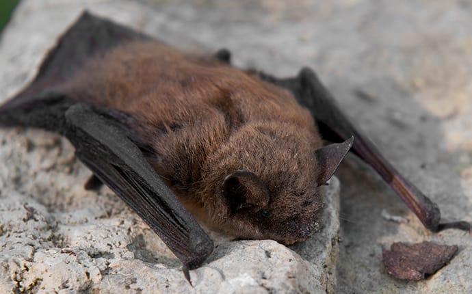 a bat crawling in a home