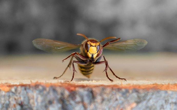 a hornet hovering over a tree stump in brick township