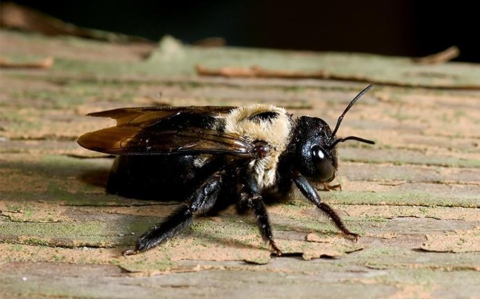 a carpenter bee crawling outside