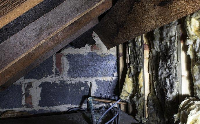 a crawl space in freehold new jersey
