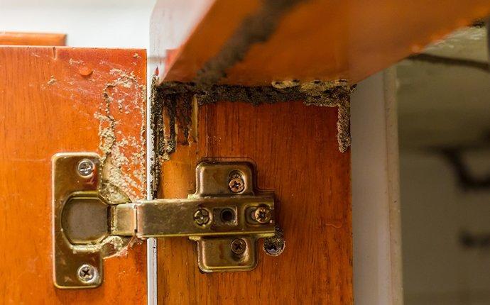 termite damage in kitchen cupboards