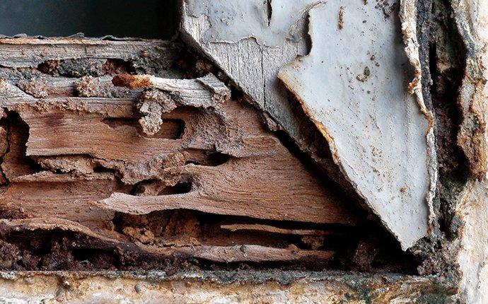 termite damage on a window frame