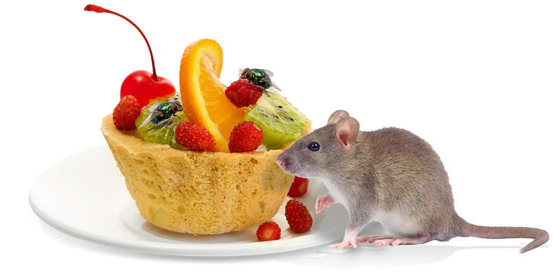a mouse crawling around food