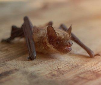 a bat on a table