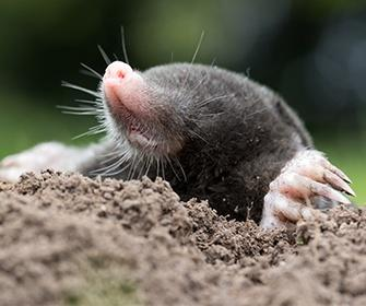 a mole outside a home