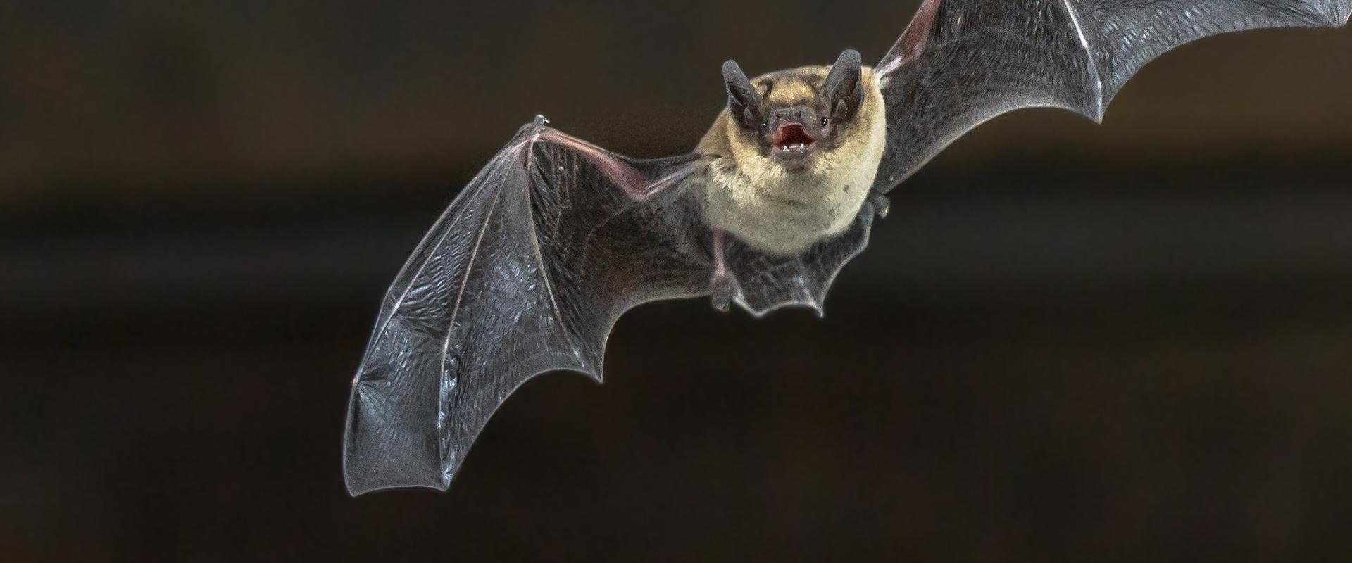 bat flying through the air