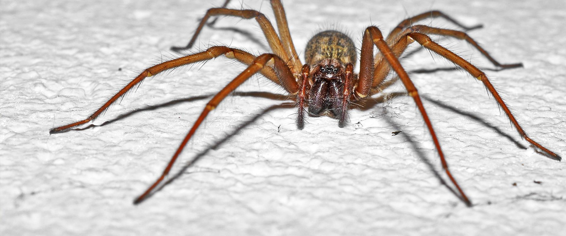 house spider on concrete