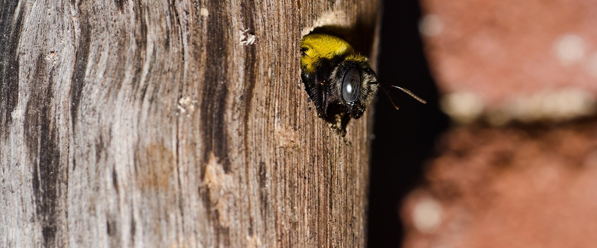 a carpenter bee on a tree