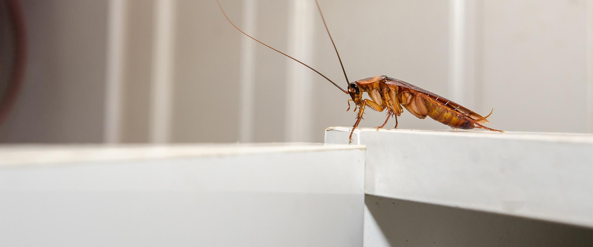 a cockroach on a bathroom sink
