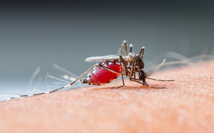 a mosquito biting a persons arm