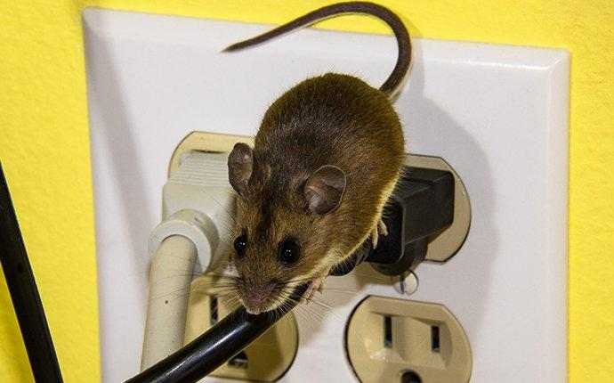 a mouse crawling on wires in moorestown