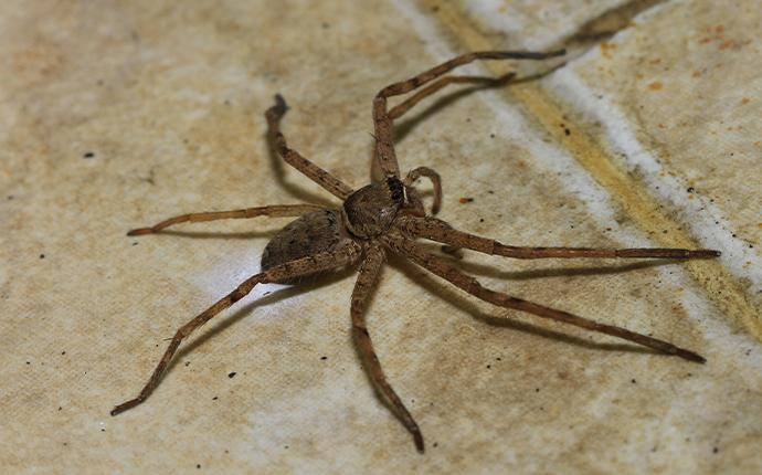 a house spider on tile