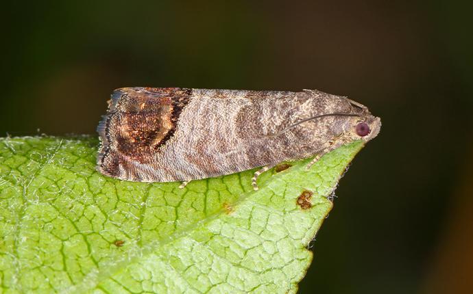 a moth resting on a leaf