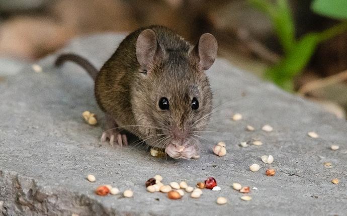 a mouse outside a house