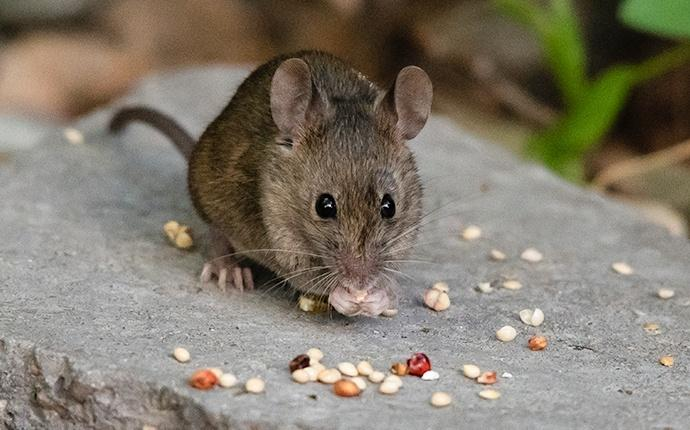 a mouse outside a house