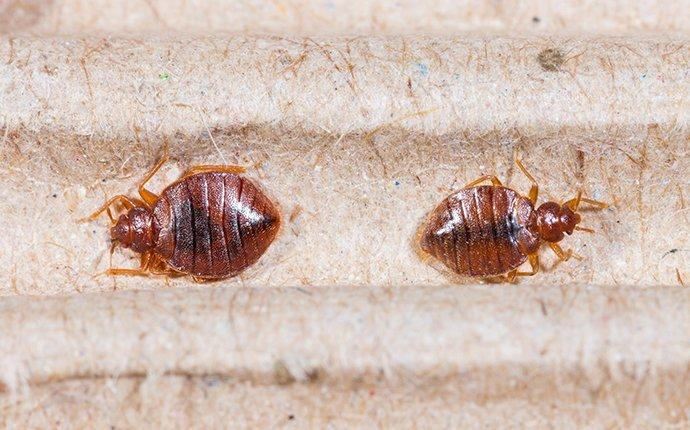 bed bug infestation in south river home
