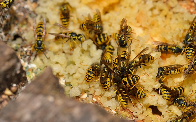 wasps crawling in their nest