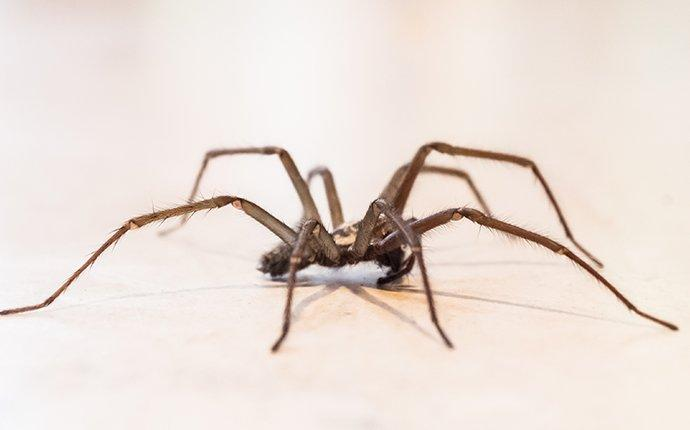 house spider crawling in a tenafly home