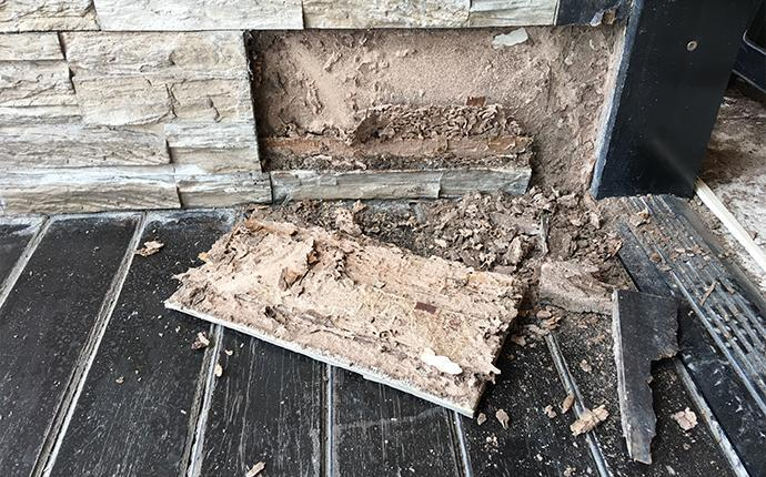 termite damage to a wall in clinton