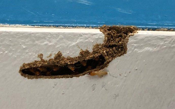 termites destroying structure of home
