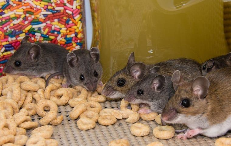 a rodent infestion in a wayne pennsylvania food pantry