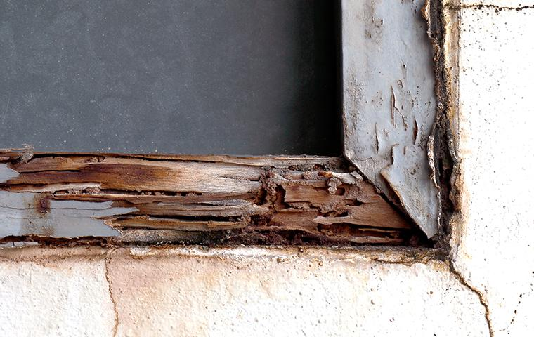 termite damage on a window frame