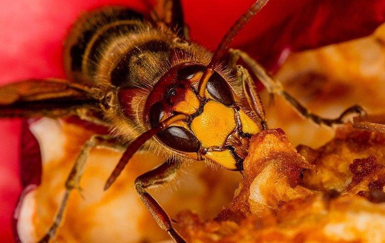 wasp crawling on an apple