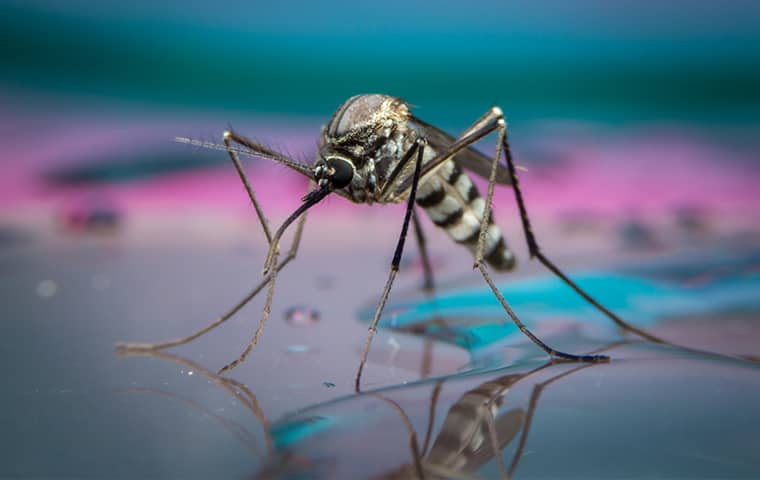 a mosquito on standing water outside of a home in montgomery pennsylvania