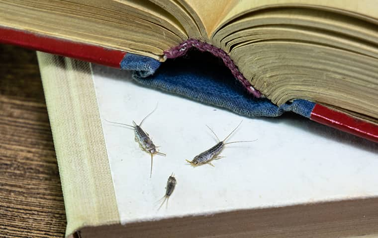 silverfish on a book inside of a home in wayne pennsylvania