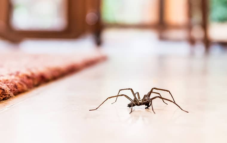 a spider crawling on a table inside of a home in montgomery pennsylvania