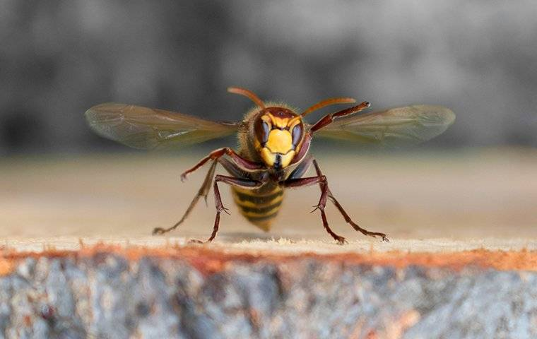 a wasp that was flying and landed on a tree stump