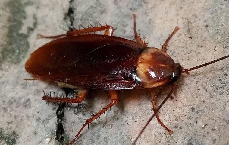 an american cockroach in a basement