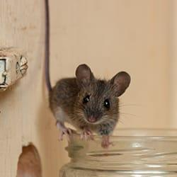 mouse on jar