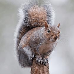 squirrel near a maine home