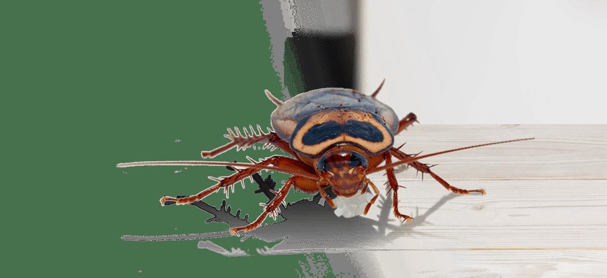 cockroach in a restaurant in gardiner maine