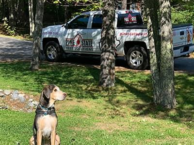 trained maine bed bug dog, bodie