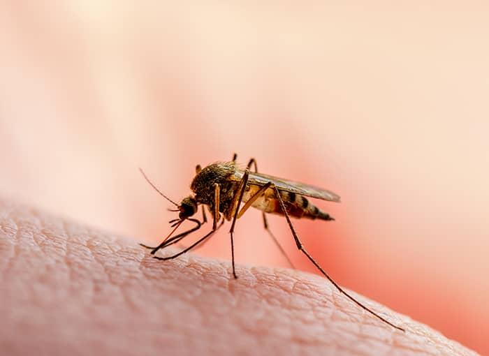 mosquito biting person in portland maine