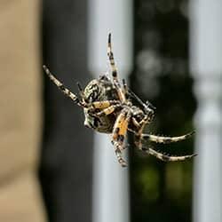 house spider found in brunswick me