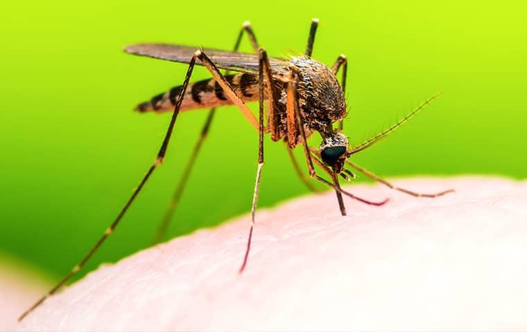 a mosquito biting a beaumont texas resident in a vibrant green back yard