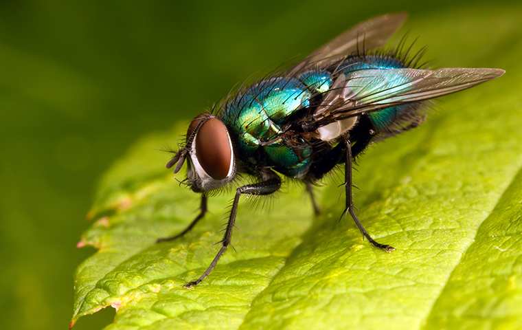 bottle fly in gilchrist texas yard
