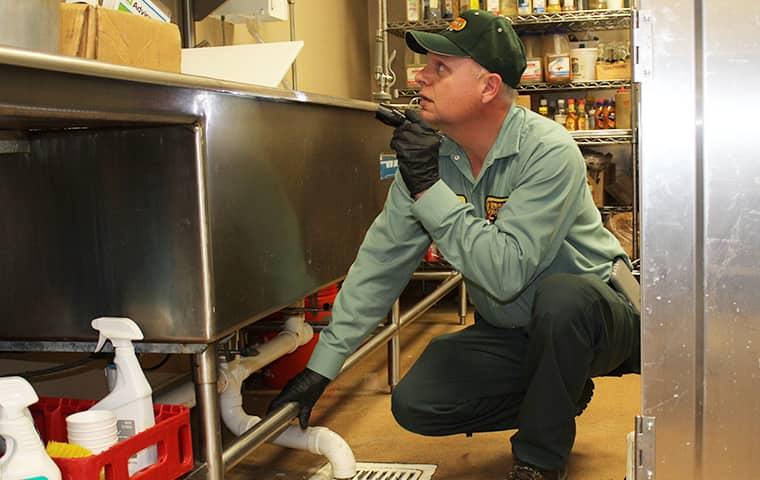 pest control technician inspecting a commercial kitchen in bridge city texas