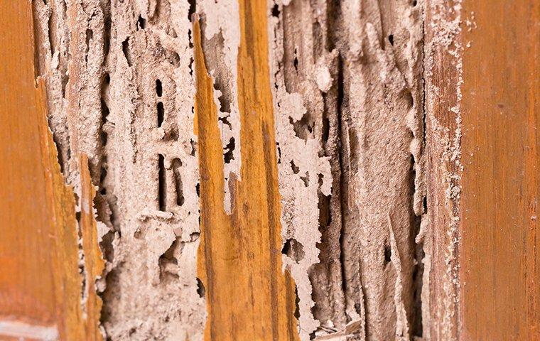 termite damage in a home in crystal beach texas
