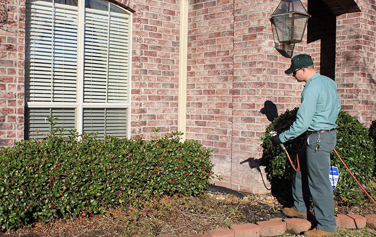 beaumont exterminator treating outside home