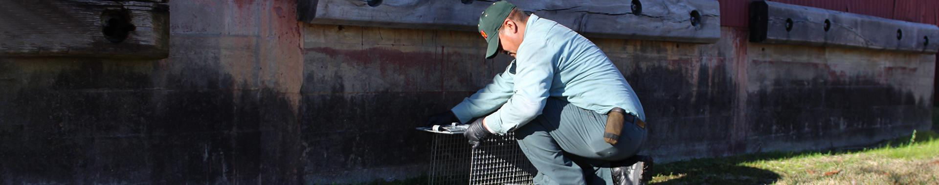 wildlife control bugspert setting trap in beaumont texas