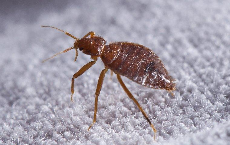 a bed bug crawling on sheets in a kountze texas home