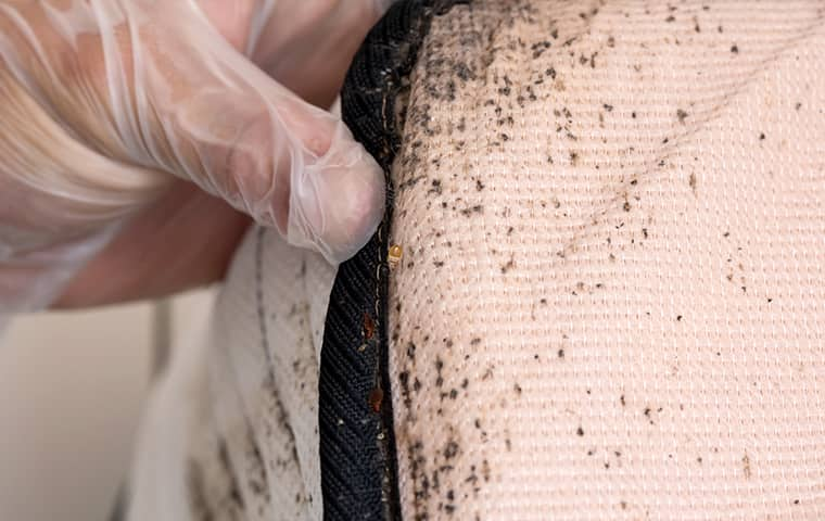 a bill clark bugsperts service technician inspecting a mattress for bed bugs inside of a home in vidor texas